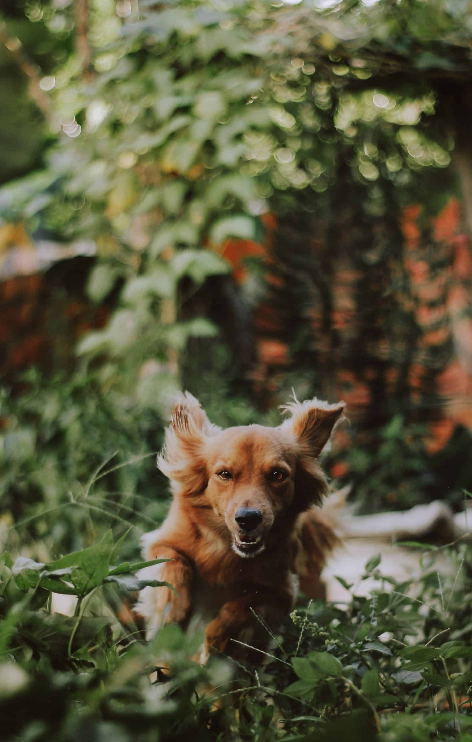 8 Things To Do For Your Dog's Garden Fun