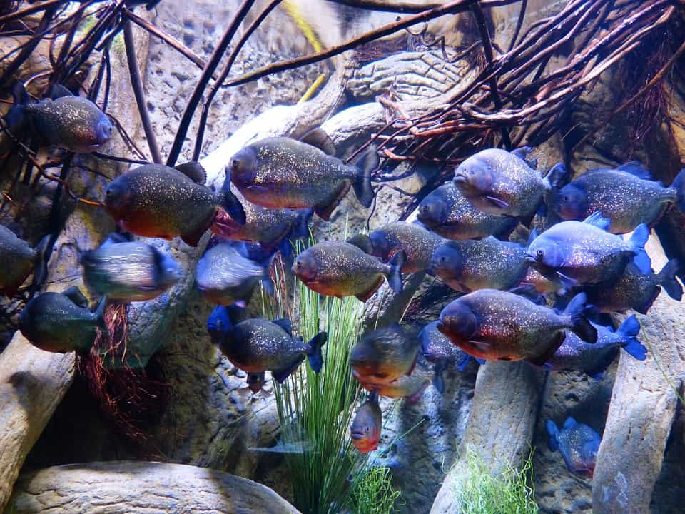 Aquascape: Ways To Make It Beautiful