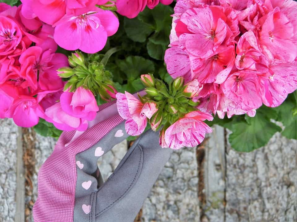 How to Use Garden Gloves