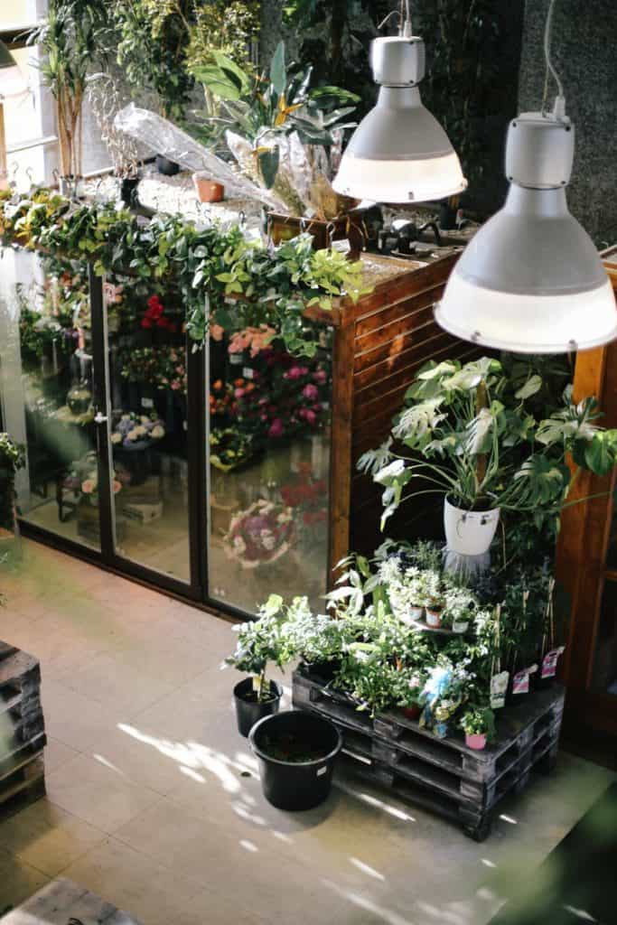 What To Know Before You Get Started On Indoor Garden?