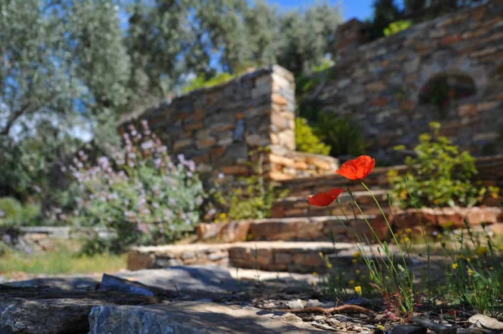 Some Interesting Rock Garden Ideas For Your Home