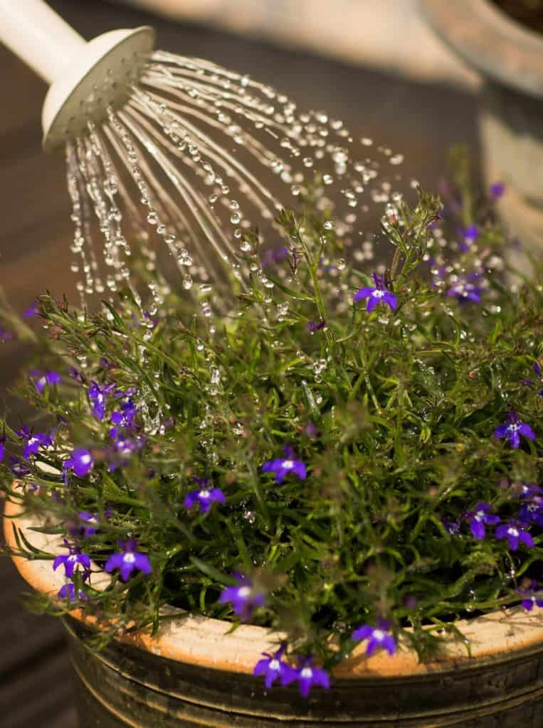 How To Choose The Water Plants For Your Water Garden?