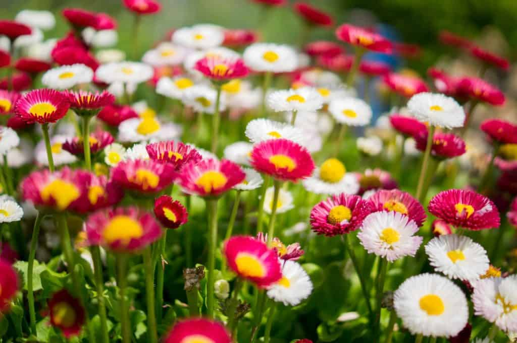 Flowering Plants: Adding Colors to Your Garden
