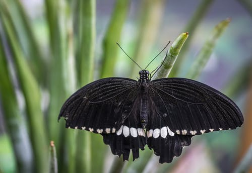 Top 10 Plants For Butterflies
