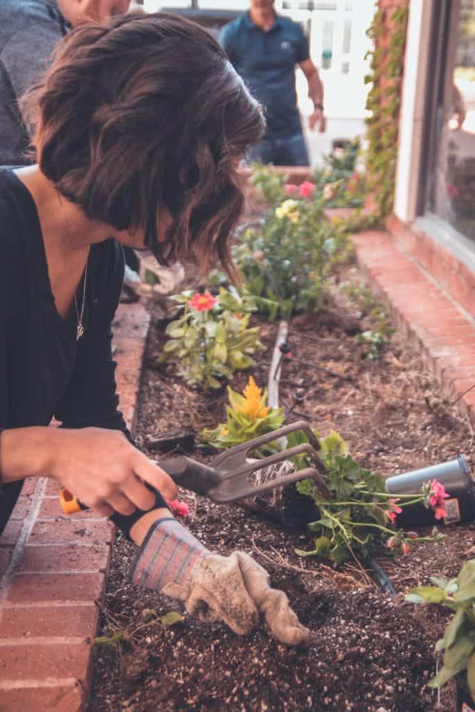 Gardening For Beginners Tips And Advice