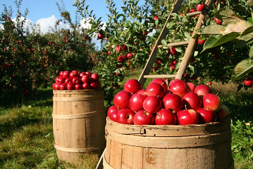 Why Organic Gardening Is Becoming So Popular?