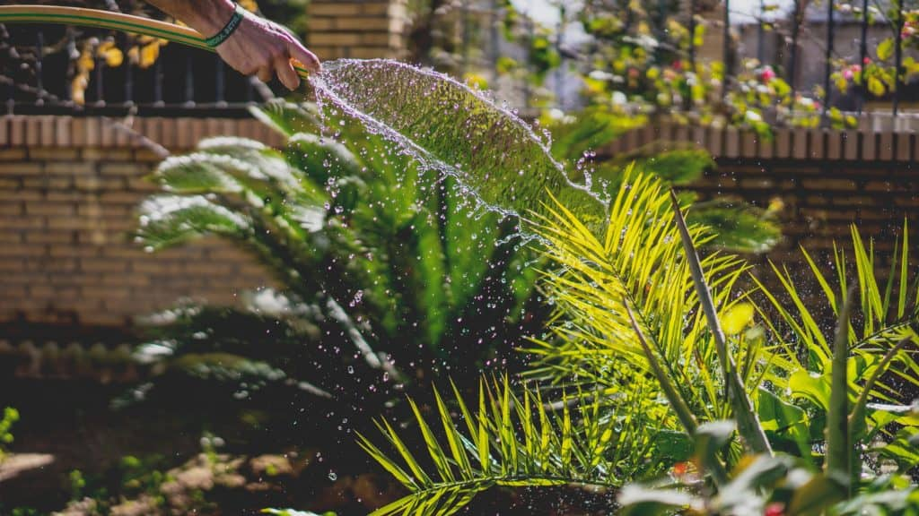 Let Us Check Some Benefits of an Automatic Sprinkler System