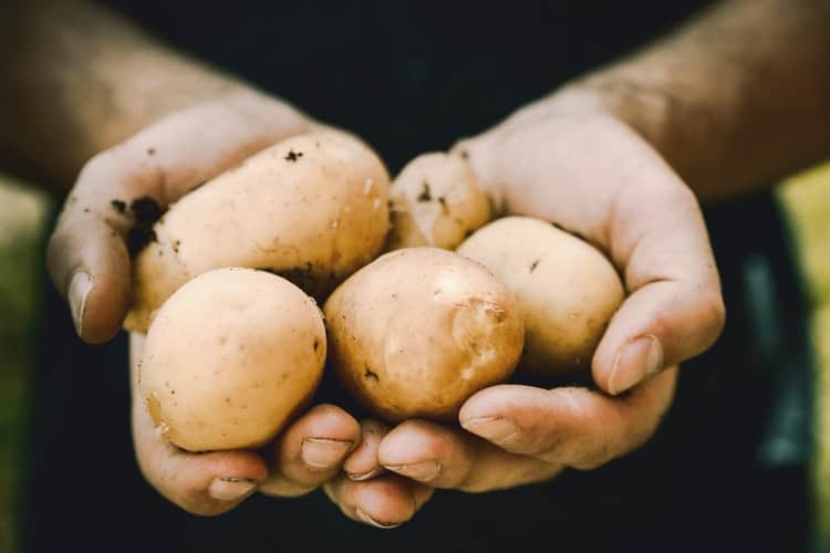 Tips For Growing Potatoes In Bags