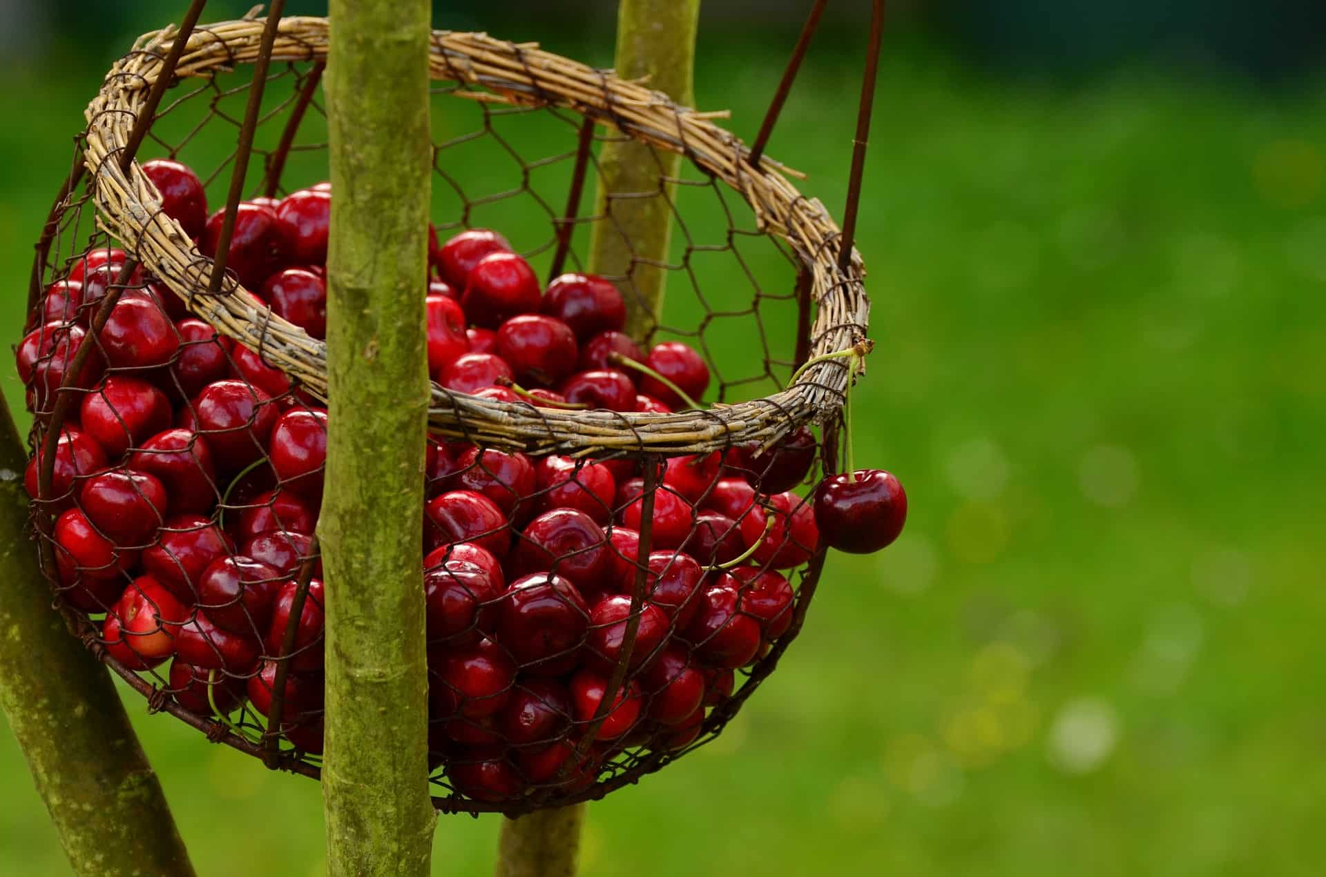 Factors Of Deep Basket Fruit Picker