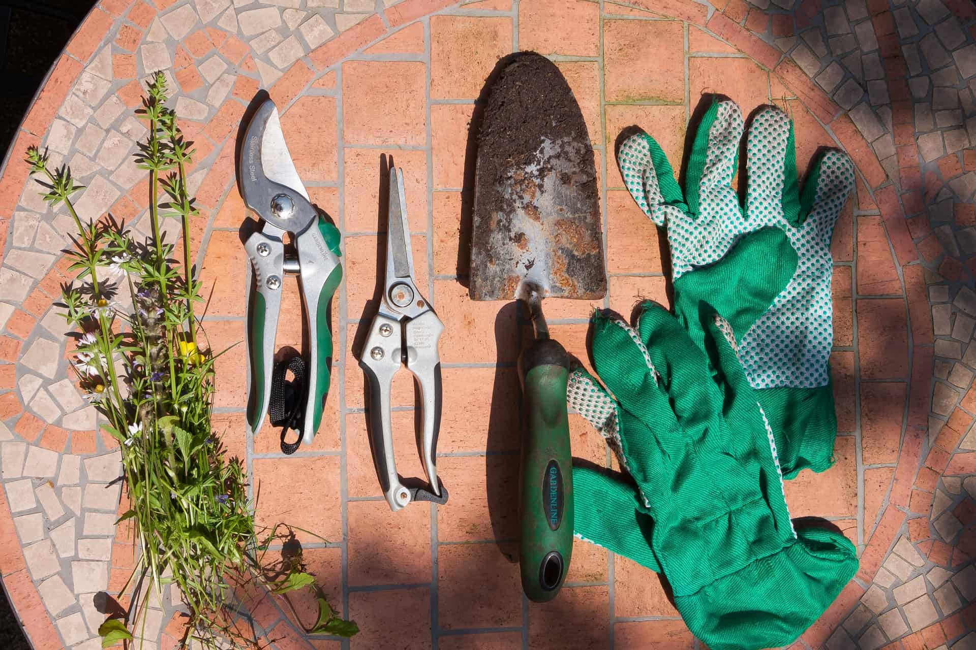 8 Uses of Gardening Shear And More Details