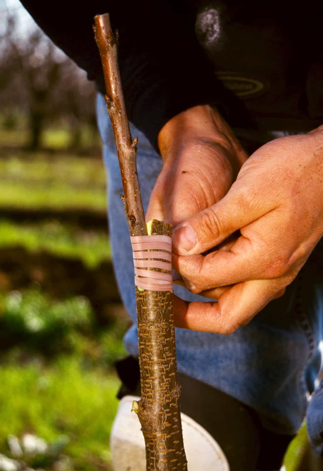 Ways To Do Grafting: What Are The Types?