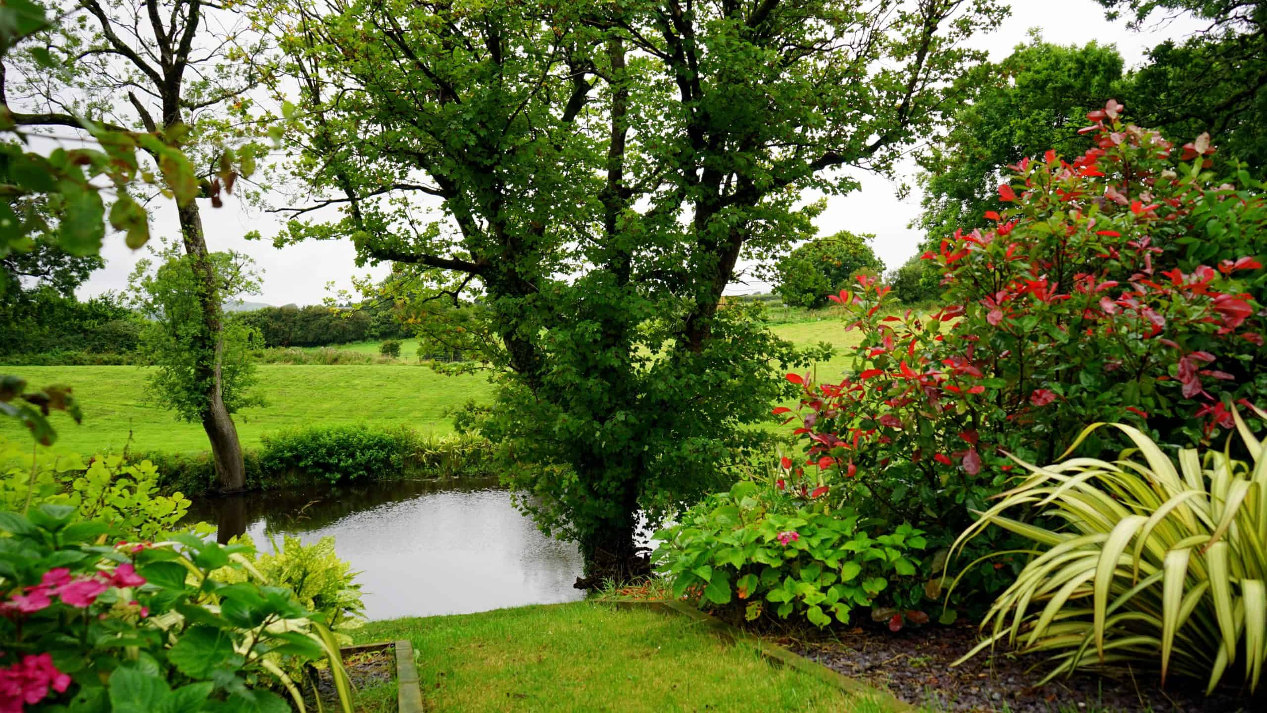 What Kind of Plants For Water Garden Do You Need?