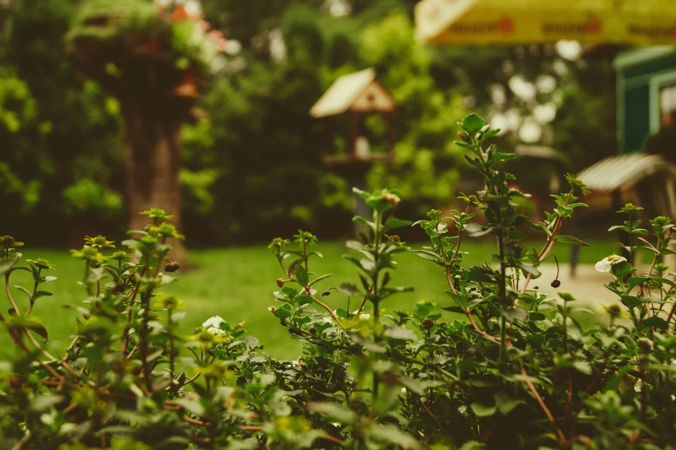 Factors To Consider While Buying Outdoor Gardening Plants