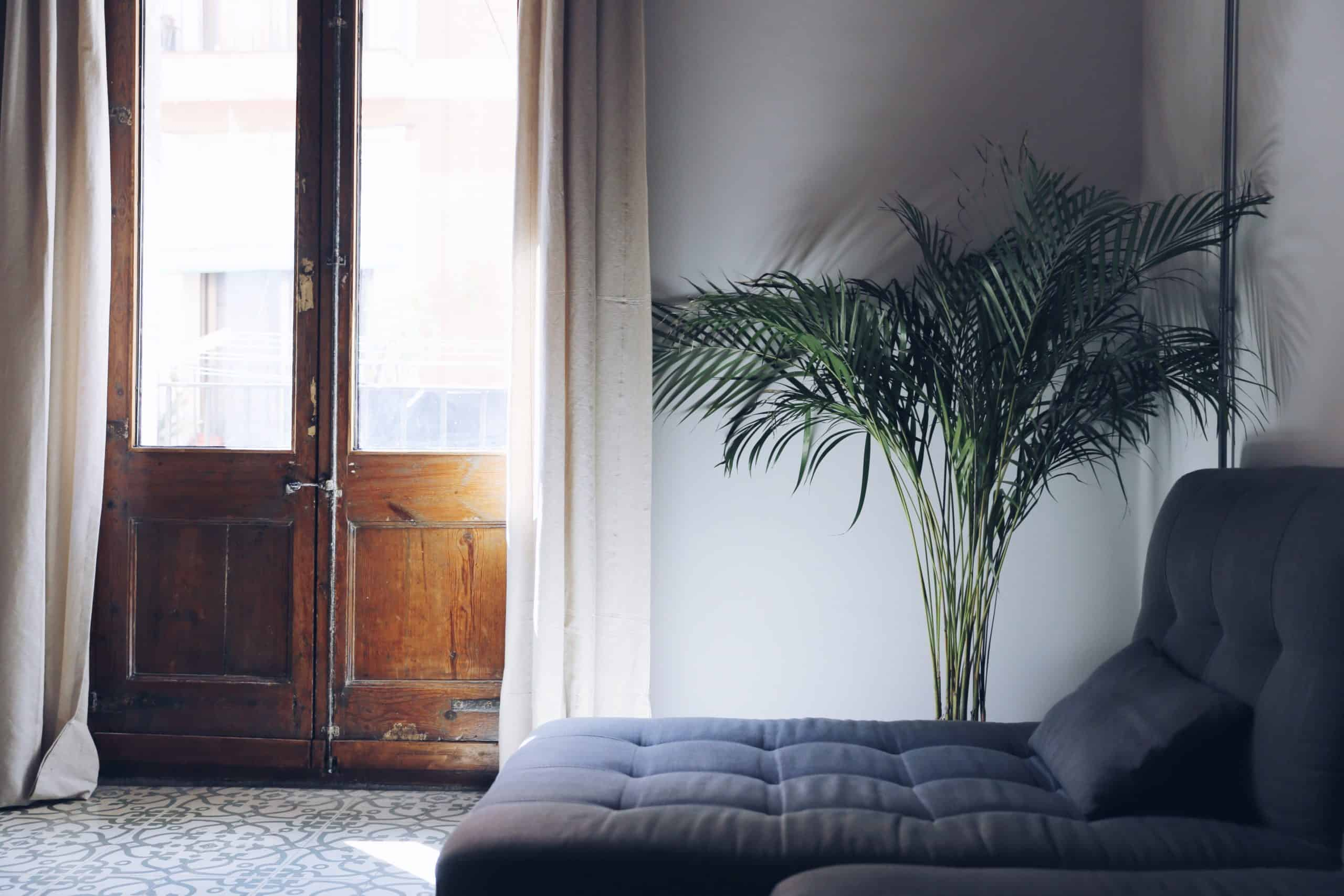 Indoor Plants - Top 5 Best Plants For Your Home