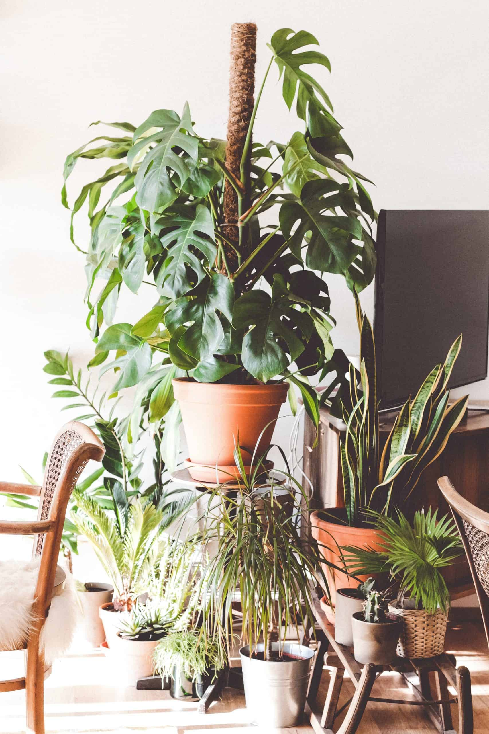 Lighting Plants - What You Need To Know