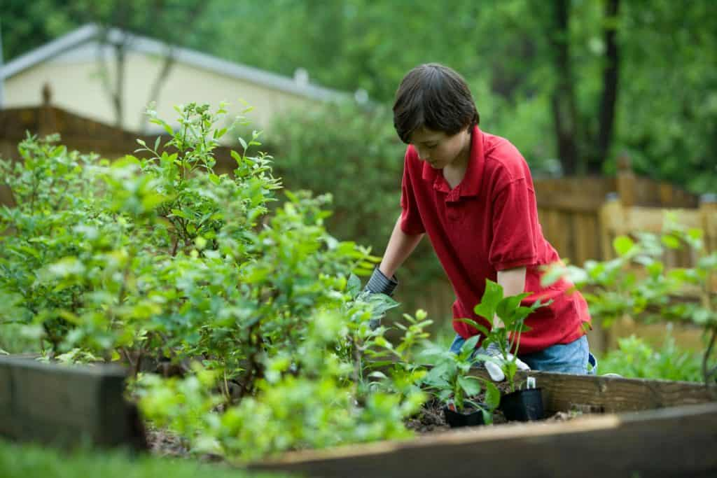 Plants For Your Garden: Is Plants A Good Option?