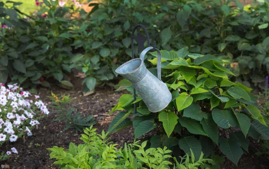 Watering Planters: Simple Task For Plants Survival