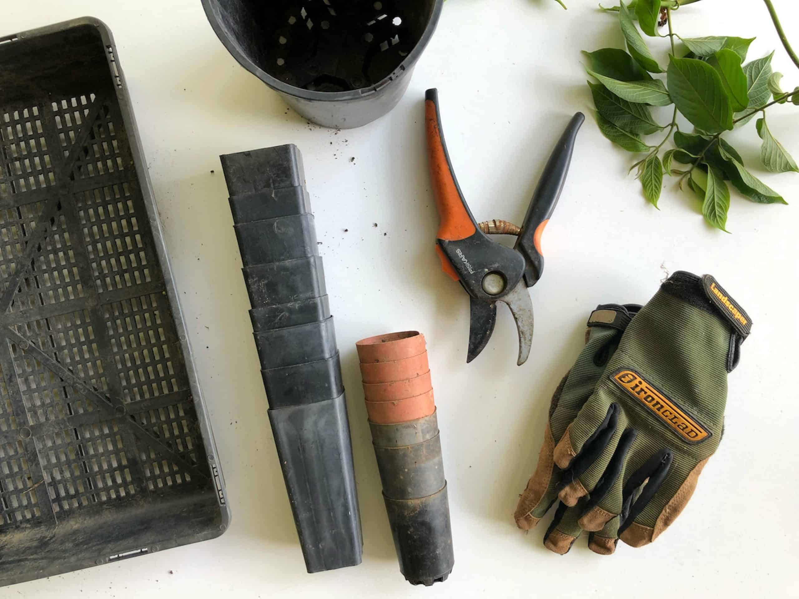 The Must-Have Gardening Tools For A Home Gardener