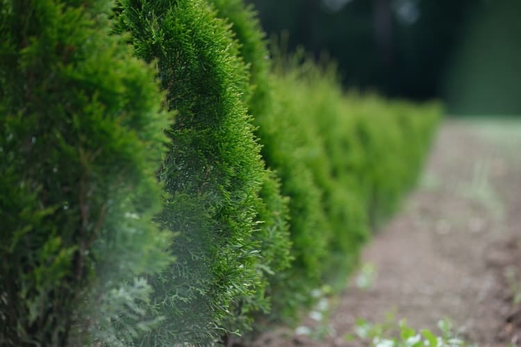 Hedge Shears Things You Should Know