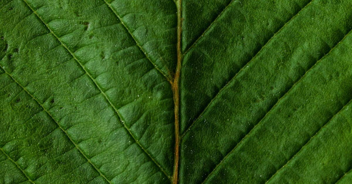 A close up of a green leaf