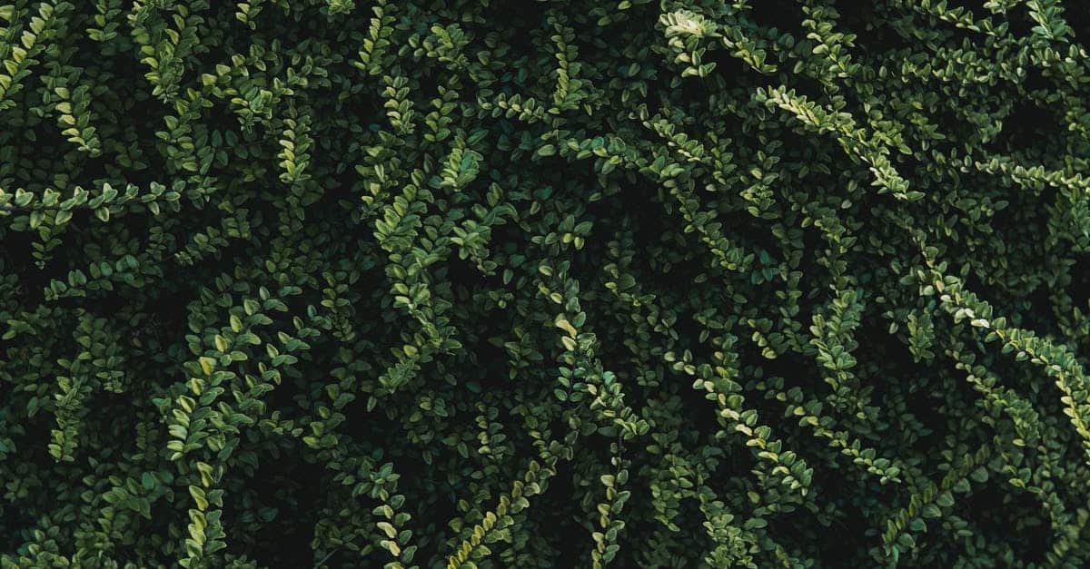 A green plant in a forest