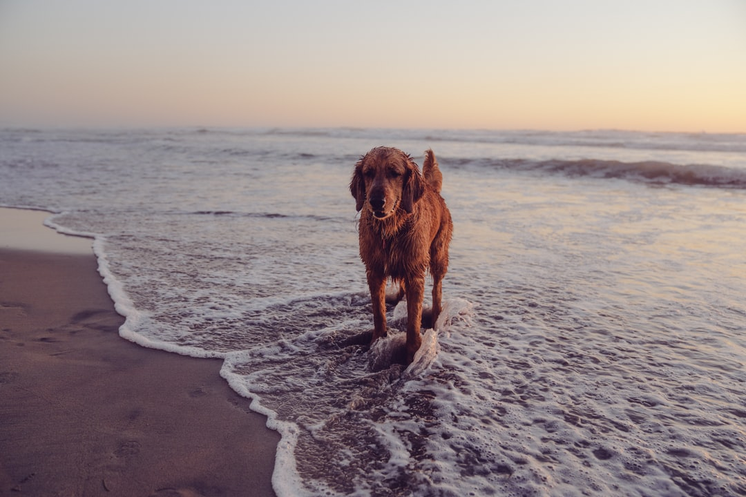 A dog standing on top of a sandy beach