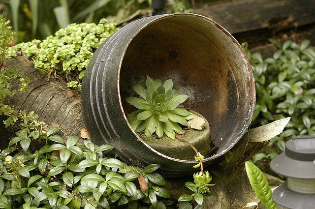 A close up of a green plant in a pot